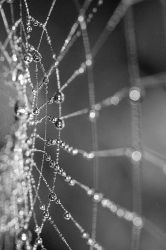 Early morning dew by duncanp