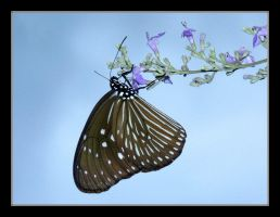 butterfly on flower by chinlop