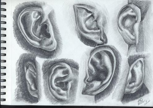Ears anatomy study by Architect-of-Dreams