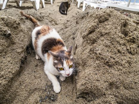 Cat on Sand by HelpTechCona