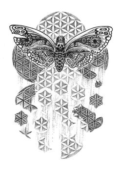 one hundred moths by lily-winter