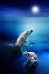 Dolphin Delights by JulieLangford