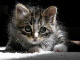 Kitten 3 by Readsway2much