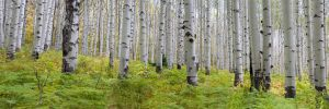 Aspen Grove  McClure pass by DGAnder