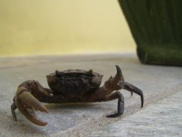 Rude Crab by alfeign