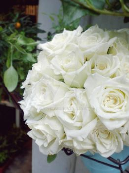 White Roses by jolenelim