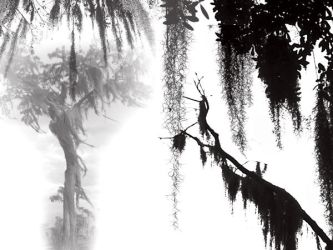 Spanish Moss by midnightstouch