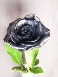 BASIC TERMS, Black rose by mmp-stock