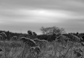 Feild by PeachPlumsPhotos