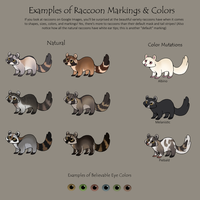 Examples of Raccoon Colors and Markings by Flora-Tea