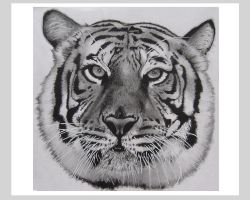 Tiger Face by AndyBuck
