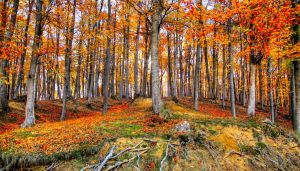 Autumn forest picture by valiunic