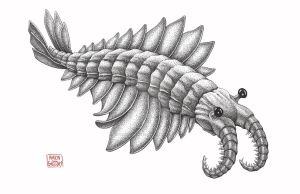 Anomalocaris by aaronjohngregory