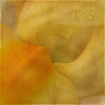 IRIS 1of2 by Inadesign