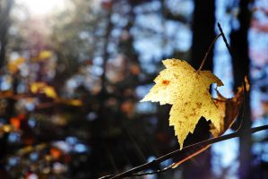Autumn colors 3 by LucieG-Stock