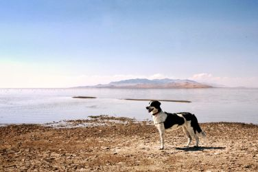 Bindi on the Great Salt Lake.  by Silo34