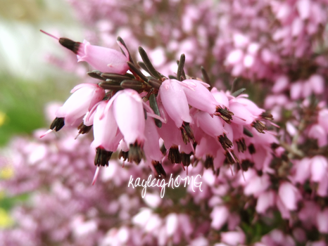 In The Heather by kayleighOMG