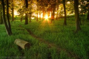 woodland by photo-earth