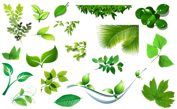 [Res] Set of Leaves PNG by HanaBell1
