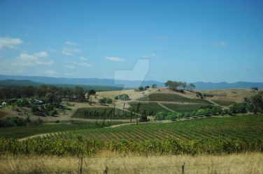 Vineyards are awesomely pretty by mugglehpfan