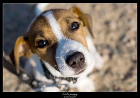 Little Puppy by bergroth