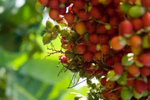Coffee Beans by conservancy