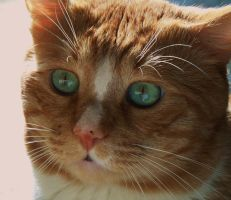 My curious cat by VasiDgallery