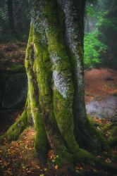 Twisted beech by mescamesh