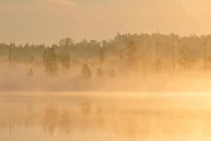 Morning in the Golden Fog by DeingeL