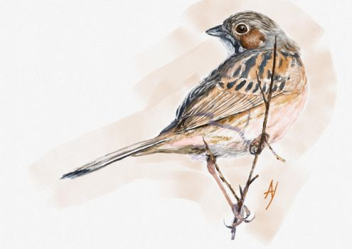 Chestnut Eared Bunting by h-i-l-e-x