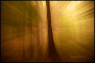 Scream of nature by mjagiellicz