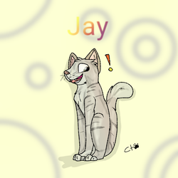 Jay the cat by Candytiger2006AJ