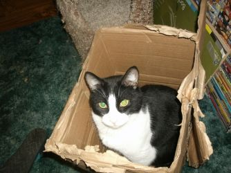 Cat in a box by Keikoku147