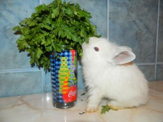 Cute bunny eating parsley by silviubacky