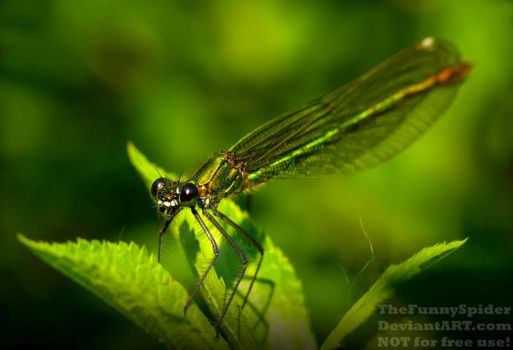 Beautiful Dragonfly enjoys the warm evening sun by TheFunnySpider
