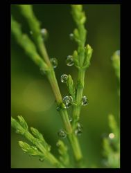 .: Waterdrops :. by Katosu