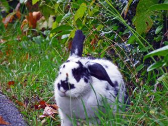 Bunny In The Grasses by wolfwings1