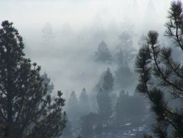 Smoke in the forest 4 by tkrain-stock