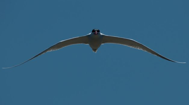 You Tern by ScottEllington
