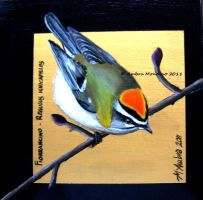 Common firecrest by flysch