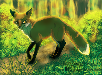 Sunny Forest by IsaviDog