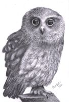 Realistic Owl by annoKat