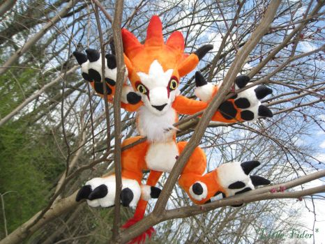 Moomba in a Tree by Lithe-Fider