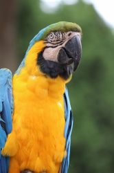 Macaw 3 by ditney