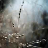 With The Blue Wind by intao