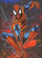 Spider Man Sketch Card by AHochrein2010