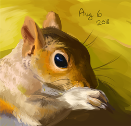 Aug 6th - Squirrel - Study a Day #1 by Keartricity