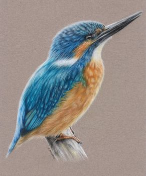 Kingfisher by Kot-Filemon