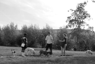 Dogs walk by steppeland