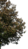 tree 31 png by gd08